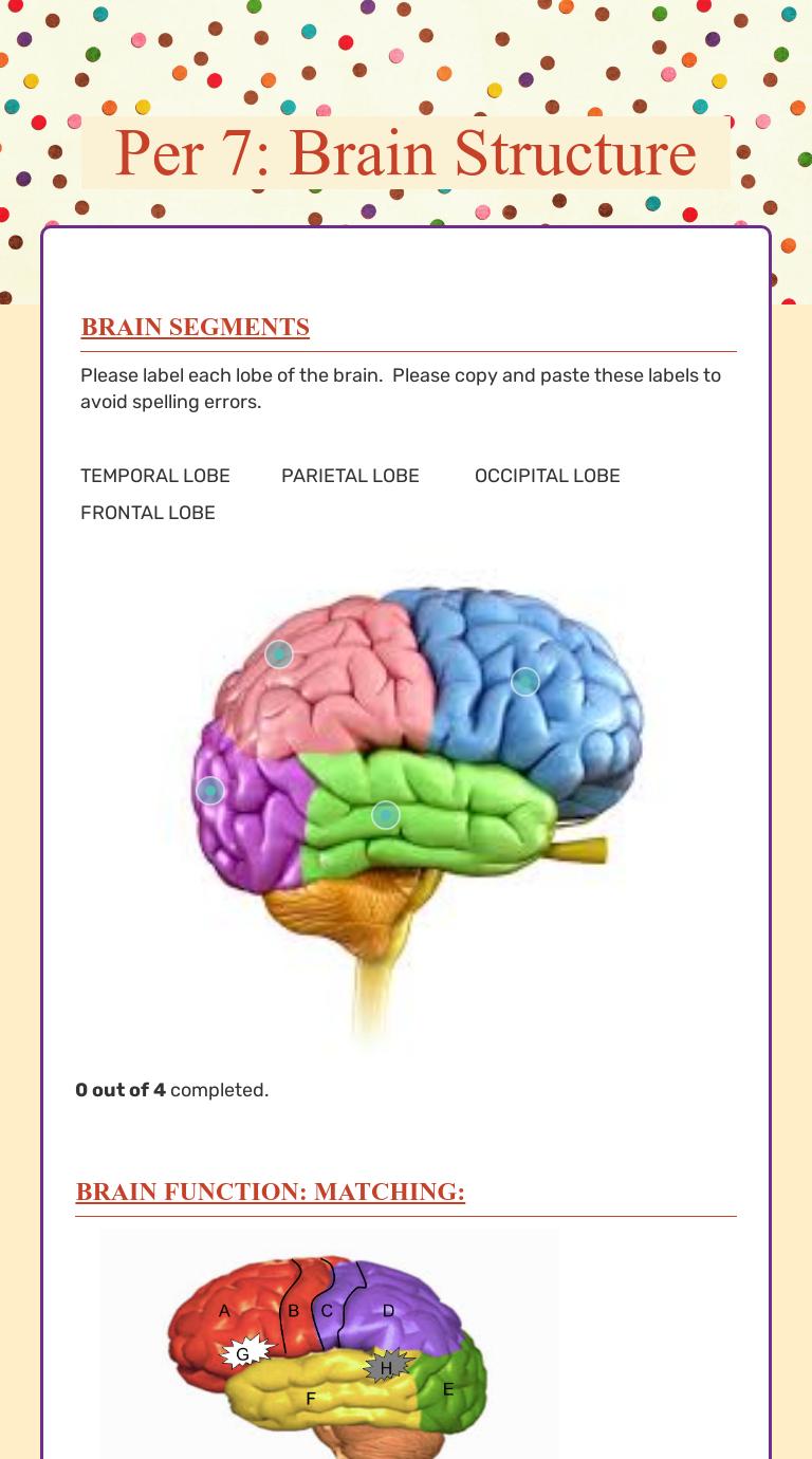 Per 7 Brain Structure Interactive Worksheet By Erin Murtagh Wizer Me