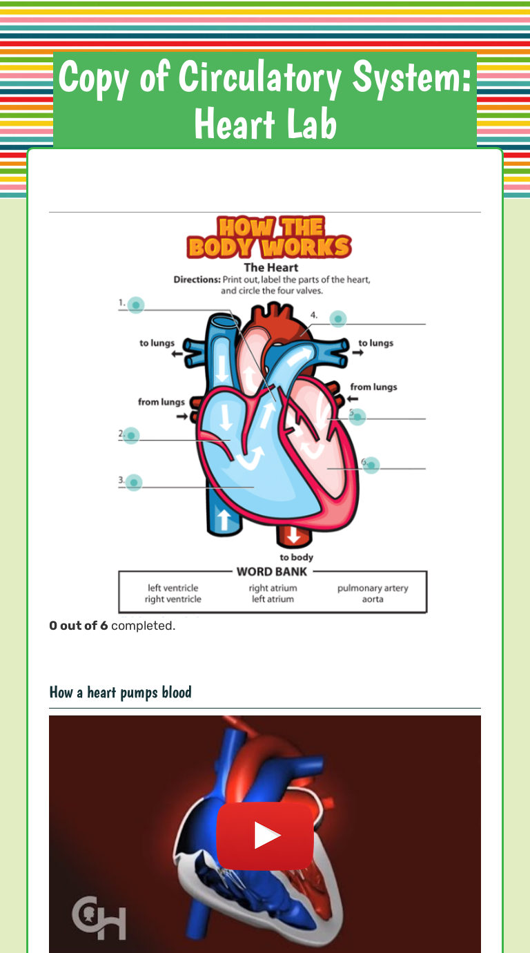 The circulatory system mr. standring